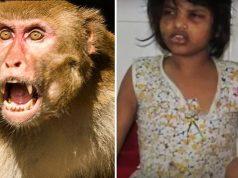 მაიმუნი-გოგონა