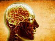 ადამინის ტვინი
