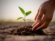 რა სარგებელს მოუტანს დედამიწას 1.3 ტრილიონი ხის დარგვა