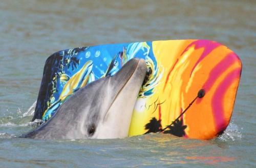 დელფინი მოკო