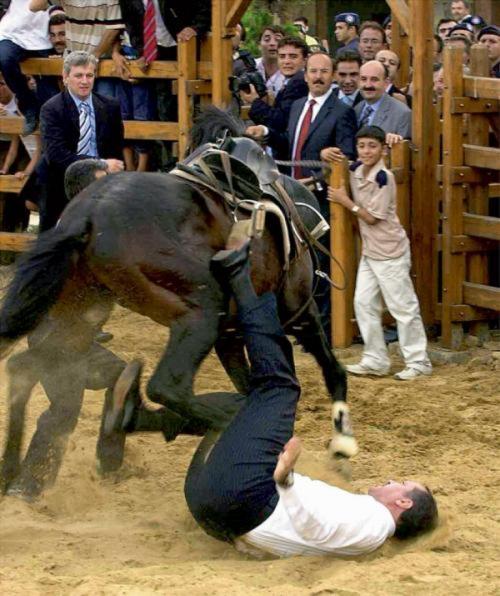 რეჯეფ თაიფ ერდოღანი და ცხენი