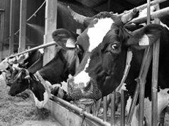 Коронавирус лишает мир продовольствия